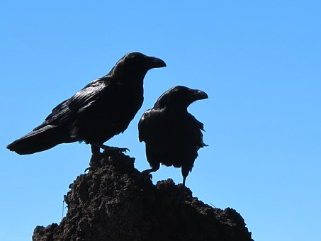 A Murder of Crows, Part 2
